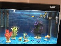 Fish tank 150 litres with fishes and lots of stuff