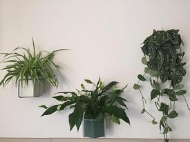 SOLD pending collection: 9 Beautiful Indoor Plants
