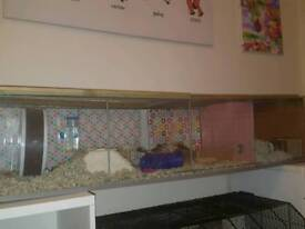 Hamster / Rodent / Gerbil Tank Detolf Cage
