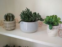 Real IKEA 12cm succulent and two artificial succulents