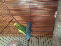 Budgie and her cage