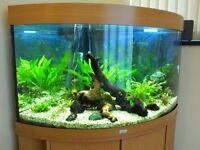 Juwel Trigon 190 Corner Fish Tank with T5 lighting and extras