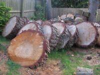 Large Log Rings