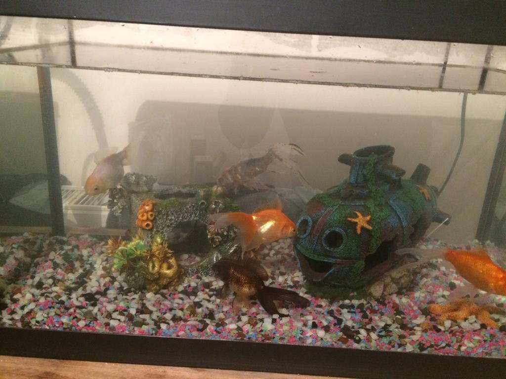 Cold water fish and tank / accessories etc - the full package