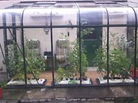 6 x 12 lean to greenhouse, 2 top openers for air circulation, sliding door.