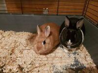 2 x rabbits