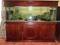 Bespoke tropical fish tank aquarium 5ft