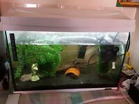 smart tropical tank with stand and equipment
