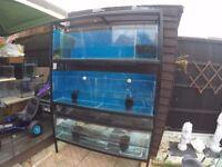 Three Tier Metal Aquarium Rack With Tanks