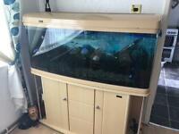 "4'2"" fish tank complete set up"