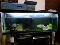 4ft fish tank with filter and turtles