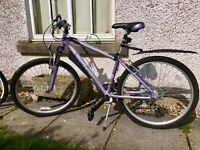 3 x Family Mountain Bikes in Fanastic condition