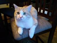 LOST/STOLEN CAT