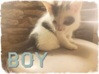 For sale 2 beautiful kittens