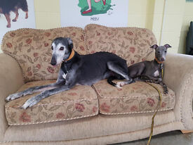Lurcher and Whippet pair