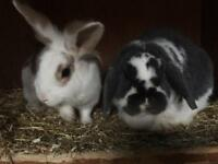 Male & Female Rabbits