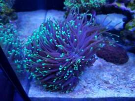 Marine Corals