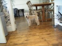 Beautifully aged Edwardian pine floorboards