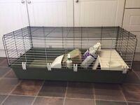 Guinea Pig \ Rabbit Cage