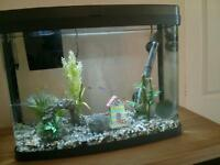 Aquarium 40 litre with or without fish