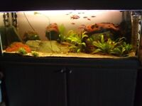 Large 4ft Fish Tank with JBL CO2 system, External Filter, Lights and Fish.