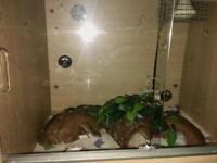 Full Leopard gecko vivarium setup