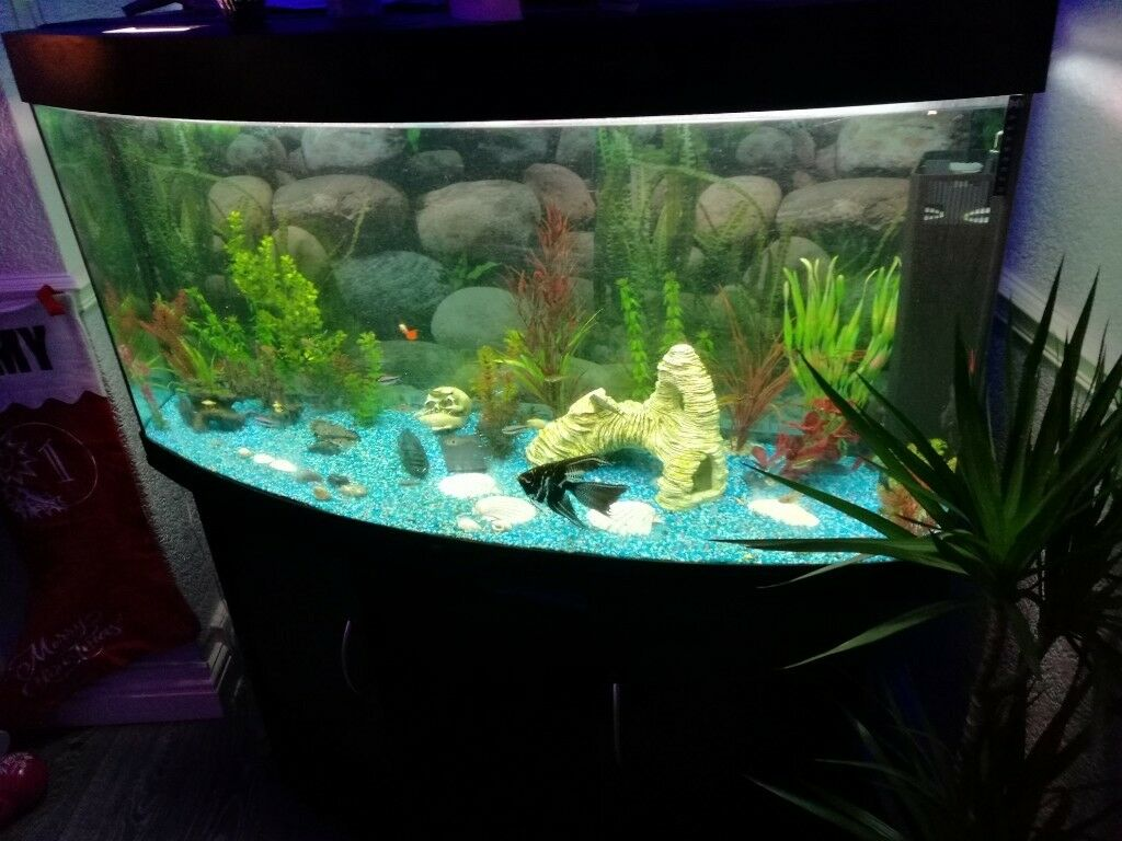 4ft Bow Fronted Tank Including Everything