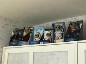 6 meerkats