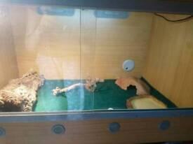 Lucky reptile vivarium