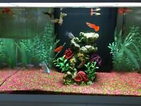 FISH TANK FOR SALE ! £90 ONO