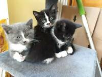 5 kittens available for new homes at the end of the month