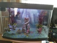 2ft panoramic fish tank 64litres full tropical set up