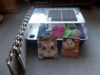 Dwarf Hamster Home, toys and books