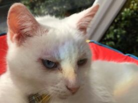 Lili the Cat for sale!