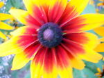BillyBuds FloralPlantaion