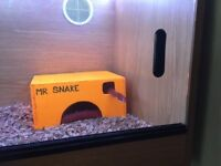 Corn snake with tank and heat Mat