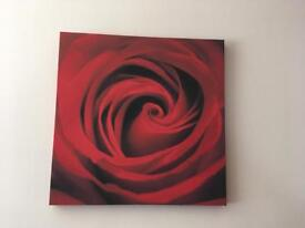 NEXT canvas wall art - red rose