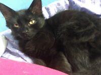 Missing Cat Fluffy