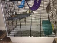 2 female rats, East Lothian