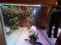 Fish Guppy Corys Shrimp Pleco Snails