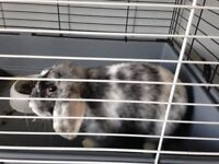 8 month old female house rabbit and double cage