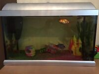 6 cold water fish and tank with bag of ornaments as pump no light but ok with out