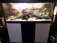 4FT FLUVAL ROMA 240 L PLUS FLUVAL FLUVAL 305 EXTERNAL FILTER