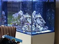 Beautiful Full Set Up Red Sea Reefer 250 in White High Gloss Aquarium Fish Tank