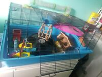 Huge hamster cage and accessories