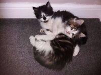 Lovely female kittens *** SOLD*******