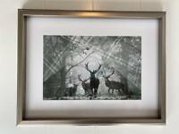 Stag Framed Prints - silver frame