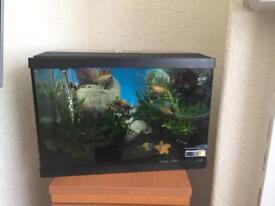 Fish tank 70liters