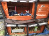 Guinea Pig Hutch and cover