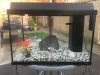65 litre Jewel fish tank